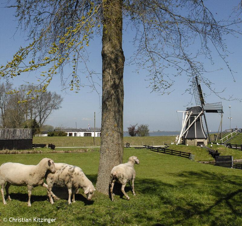 Enkhuizen 2013 (Zuiderzee Museum de plein air)