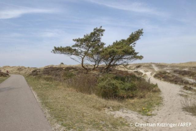 Entre Alkmaar et Schrool 2013