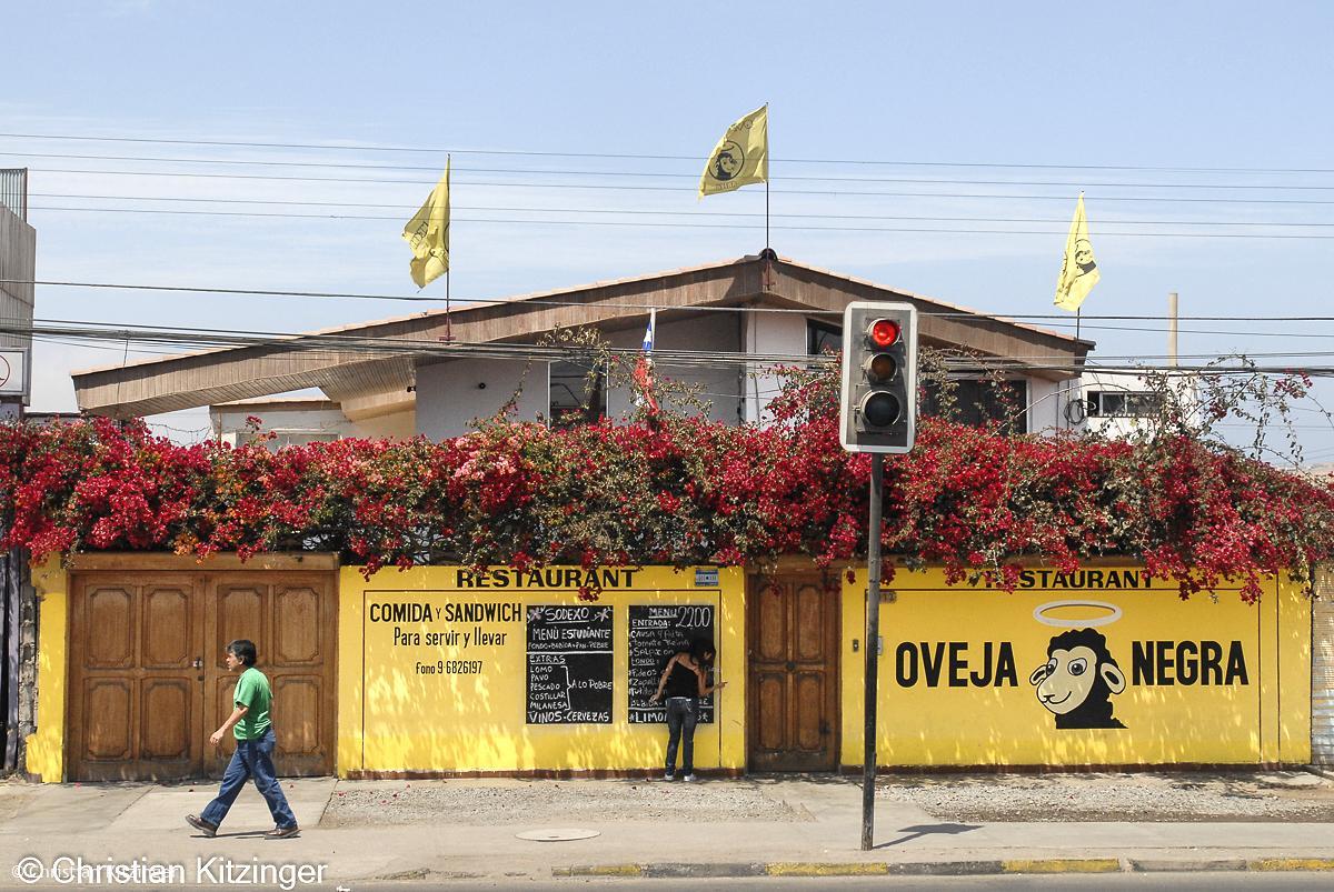 Arica Chili 2010